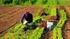 immagine di lavoro rurale