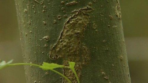 Vivaio Forestale Lazio : I lecci della forestale lungo il cammino di francesco donate